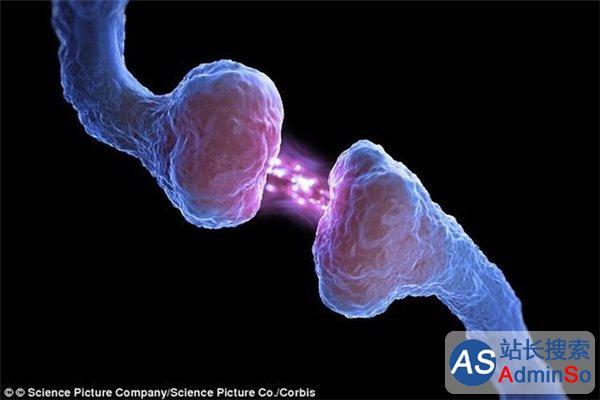 """植入记忆不是梦 科学家发现大脑""""记忆方程式"""""""