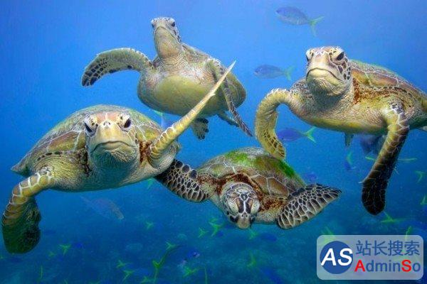 海洋种群过去40年减半 人类过度捕捞