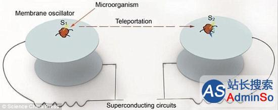 生物量子叠加是答案 瞬间移动可成真