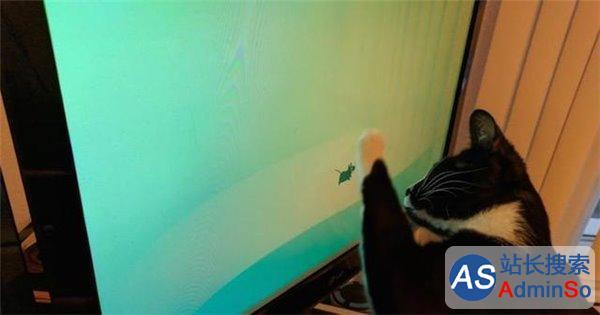 """猫对显示器有""""物理伤害"""" Linux桌面Xfce曝出严重""""Bug"""""""