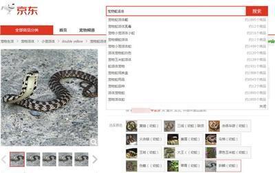 女子网购银环蛇被咬伤后脑死亡邮寄活体动物属违法