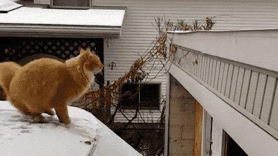 猫能跳2米高?我居然信了科学家的鬼话……