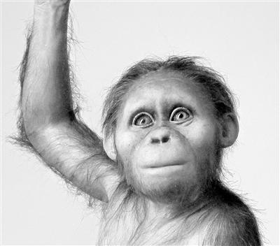 人类祖先大脑与类人猿相似但发育缓慢