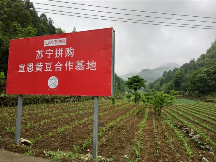 聚焦乡村振兴,全国人大代表张近东建议大力发展C2M生产基地