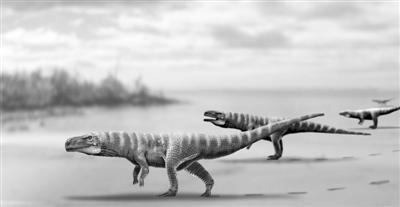 古代双足行走的不仅有恐龙,还有鳄鱼