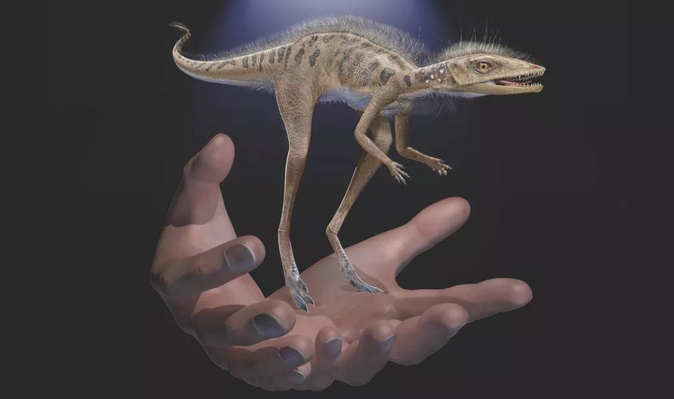 外媒:科学家发现体型比手机还小的恐龙化石